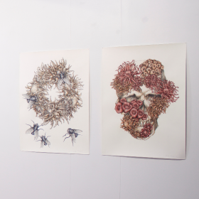 Sandra Thomson, Coral Wreath, 2016, acrylic and chalk pencil (left). Fated, 2016, acrylic and chalk pencil (right)