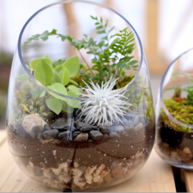 Terrarium Workshop with Byron